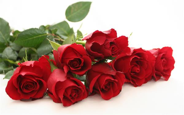 Juniors will be selling  red roses as a fundraiser for prom. The prices are as follows:  1  rose - $5 1/2 dozen - $25 1 dozen - $45  Please contact a junior class member or Miss Pust at the school for more information.
